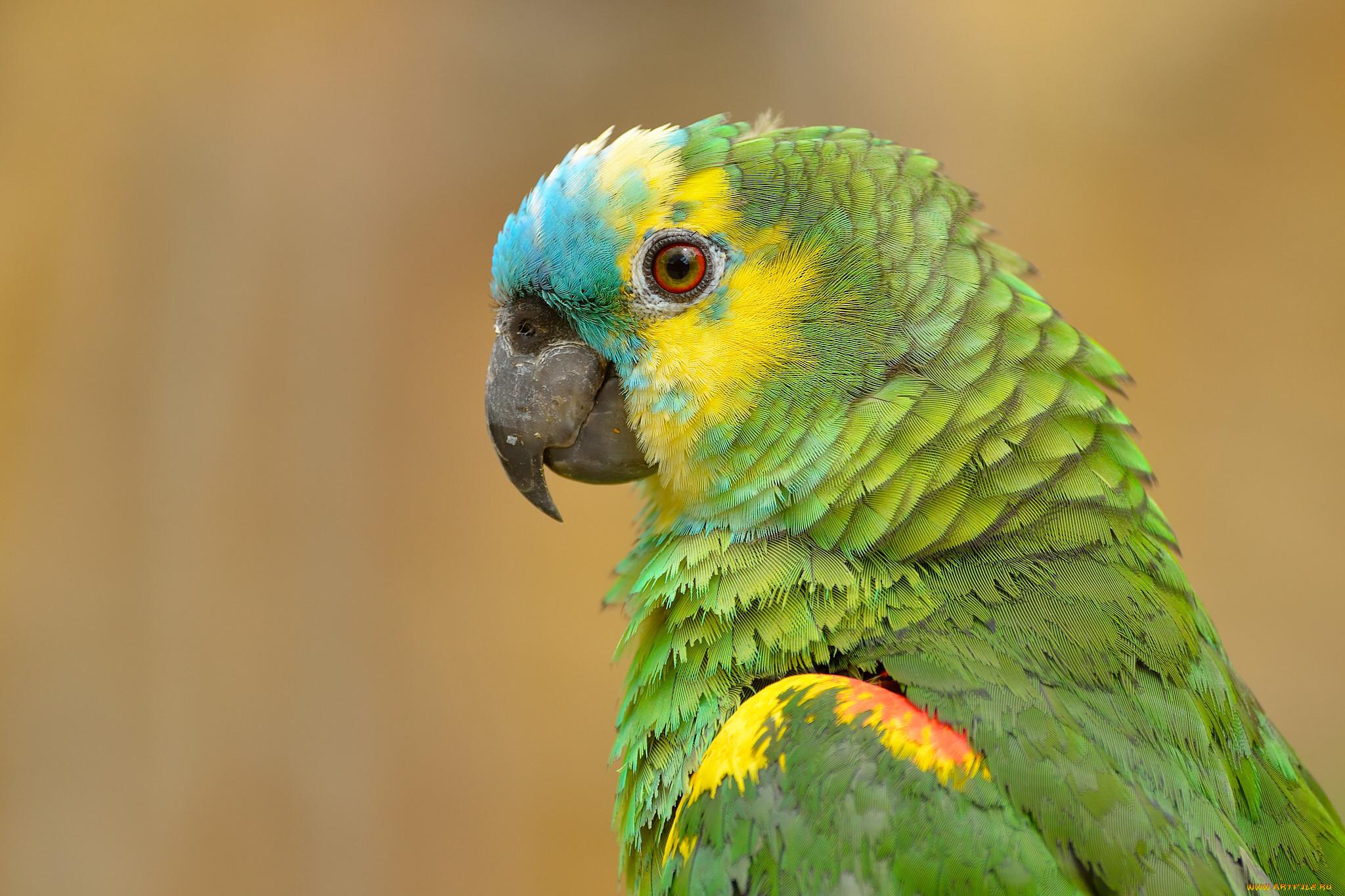 смотреть картинки попугаев всех видов всех камер, легально